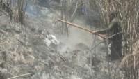 11,4 Hektare Hutan di Gunung Semeru Terbakar