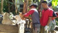 113 Ekor Anjing DiberiVaksin untuk Cegah Rabies
