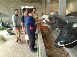 116 Ekor Sapi dan 325 Kambing di Tiga Kecamatan Terima Kartu Sehat Layak Kurban