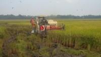 Pengusaha di Kualasekampung Pertanyakan Retribusi Jasa Combine Harvester