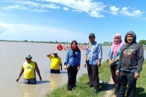 Terendam Banjir, 339 Ha Tanaman Padi di Palas Puso
