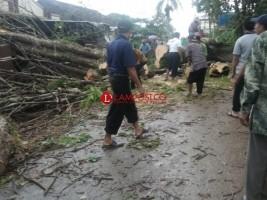 Hujan Deras, Pohon Besar Dibelakang SMK Yadika Natar Roboh