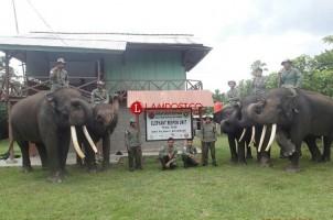 27 Ekor Gajah Andalan Jaga Daerah Rawan Konflik