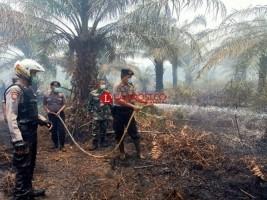 Lahan Perkebunan Sawit di Mesuji Terbakar