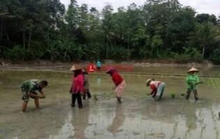24 Poktan Kotabumi Utara Minta Bantuan Benih Padi NonHibrida