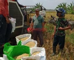 31.824 Hektare Sawah Mesuji Diklaim Aman dari Gagal Panen