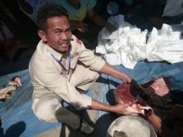 5 Ekor Sapi Kurban di Lambar Terjangkit Cacing Hati