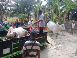 5 Sapi di Candipuro Raib Dicuri, 2 Ditemukan di Perbatasan Lamtim