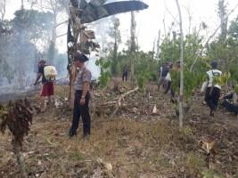 7 Hektare Perkebunan Warga Ludes Dilalap Api