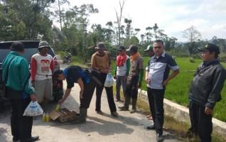 70 Ha Tanaman Padi Petani Lambar Diserang Wereng