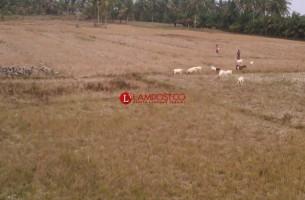 90 Persen Lahan Pertanian di Ketapang Dibiarkan Nganggur