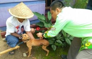 92 Ekor Hewan Pembawa Rabies di Desa Margorejo Telah Divaksin