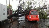 Angin Kencang, Angkot Ringsek Tertimpa Pohon