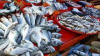Angka Konsumsi Ikan Rumah Tangga Bandar Lampung di 2017 Capai 21,87 Kilo Per Kapita