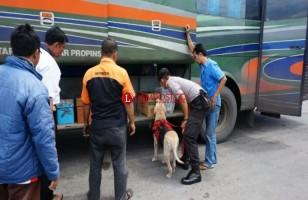 Anjing Pelacak Juara Gagalkan Penyelundupan Narkoba