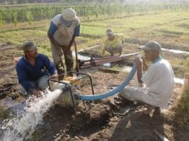 Antisipasi Kemarau, Petani Bisa Gunakan Sumur Bor dan Varietas Padi Tahan Kering