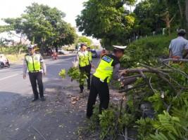 Antisipasi Keselamatan Pengendara, Satlantas Polres Lamsel Pangkas Pohon di Jalinsum
