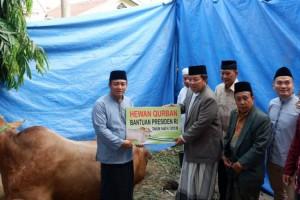 Arinal Serahkan Bantuan Sapi Kurban 1 Ton dari Presiden Jokowi