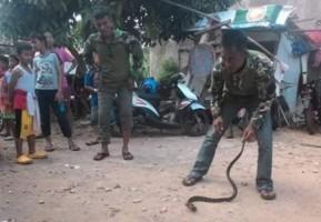 Atrox Snake Wadah bagi Pecinta Ular di Lampung