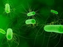 Bakteri Pemakan Polusi