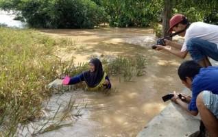Banjir Rusak Belasan Hektare Tanaman Padi Siap Panen di Palas