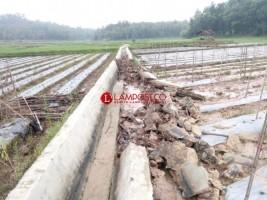 Banjir Rusak Saluran Irigasi Way Langsep di Pringsewu