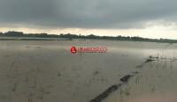 Banjir Sebabkan 562 Ha Tanaman Padi di Lamtim Puso