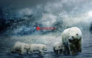 Bayi Beruang