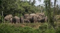 Belasan Gajah di Suoh Mulai Bergeser