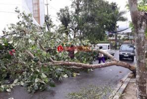 BPBD Bandar Lampung Catat77 Pohon Tumbang Selama 2018