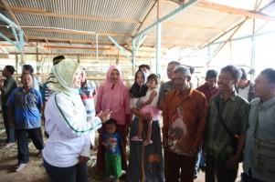Bupati Lamtim Serahkan Bantuan 420 Ekor Ternak Sapi
