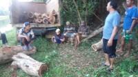 Diduga Membalak Kayu Sonokeling di Pinggir Irigasi, 5 Warga Diamankan