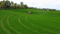 Dinas Pertanian Lampura Ukur Ulang Luas Lahan Sawah dengan Sistem E-Reporting