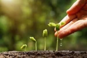 Dinas Pertanian Pringsewu Terus Upayakan Program Palawija