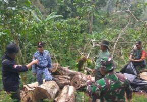 Dishut Lampung-Kodim Lamsel Musnahkan Kayu Sitaan Pembalakan Liar