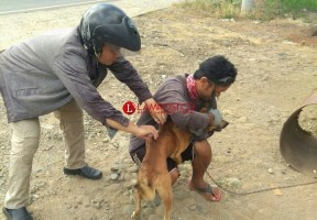 Distan Imbau Warga Bukit Kemuning Lapor Jika Melihat Keberadaan Anjing Liar