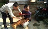 Distan Lampung Utara Gelar Vaksinasi Anti Rabies