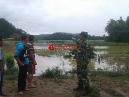 Diterjang Banjir, 6 Ha Sawah di Ulubelu Terancam Gagal Panen