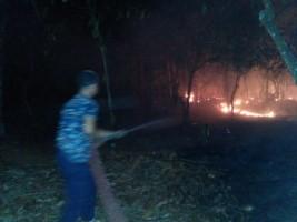 Dua Karhutla Terjadi di Lampung Selatan