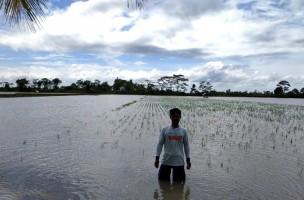 Duka Petani di Palas Usai Banjir