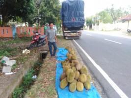 Durian Lampung Jadi Daya Tarik Wisatawan