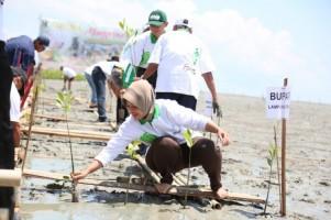 Festival Mangrove Ajak Jaga Lingkungan dan Promosi Wisata