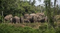 Konflik Gajah-Manusia di Suoh, Puluhan Anak Terpaksa Tidak Masuk Sekolah