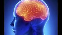 Gangguan Makan dengan Otak