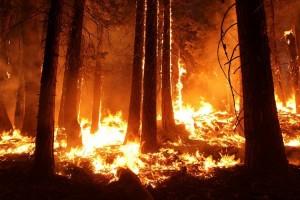 Gencar Cegah Kebakaran Hutan