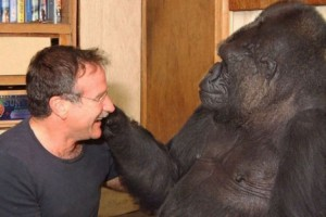 Gorila Pintar Meninggal