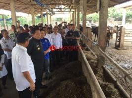 Habis dari Lamtim, Gubernur Kunjungi Peternakan Sapi di Metro