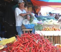 Harga Cabai Merah Anjlok, Petani di Lamsel Merugi