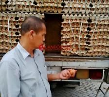Harga Telur Ayam Ras di Lampung Selatan Tembus Rp28 Ribu Per Kilo