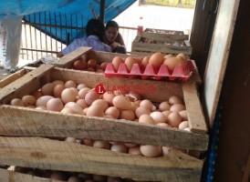 Harga Telur di Sejumlah Pasar Kotabumi Masih Tinggi